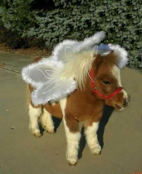 costume angel Miniature Horse squee horse - 6662905856