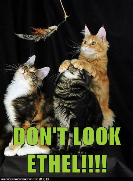 dont-look hide face eyes cover Cats captions - 6662952192