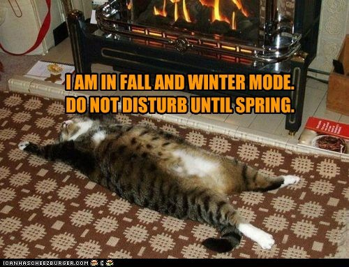fall winter autumn fire fireplace relax cozy Cats captions - 6663100160