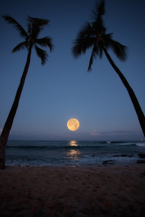 beach,moon,full moon,palm trees