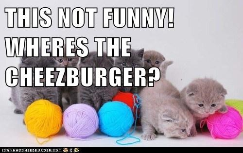 Cheezburger Image 6663177984