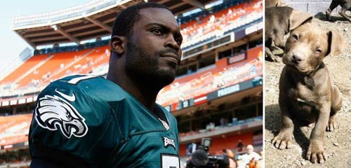 michael vick,Animal Abuse,This Is All Kinds Of Wrong