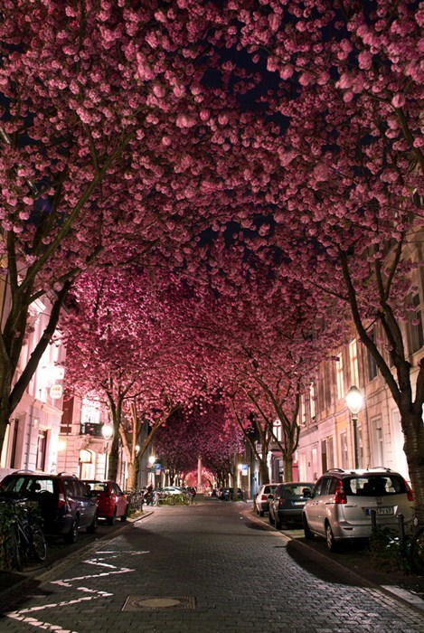 bloom seasons trees blossom Germany europe cityscape best of week Hall of Fame - 6663606272