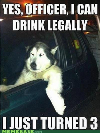 drinking dog years ages alcohol police people laws things the world dogs