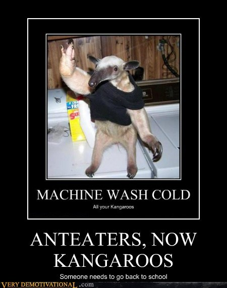 anteaters kangaroos animals idiots - 6664025344