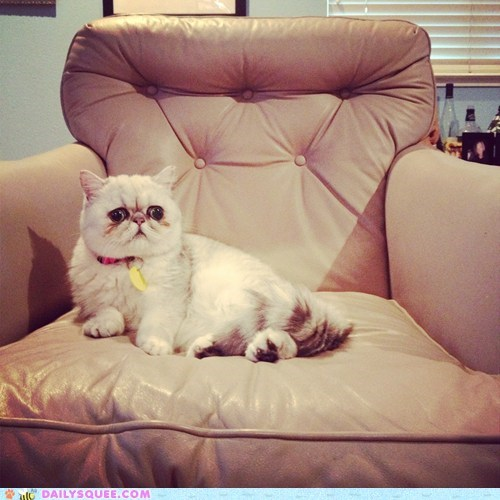 chair cat reader squee pet squee - 6664269568