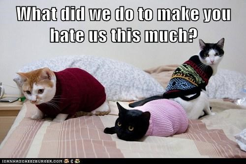 hate,sweater,outfits,costume,bed,Cats,captions,why