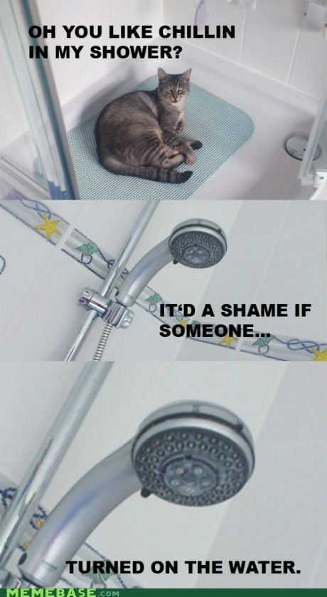 shower,Cats,chilling,itd-be-a-shame,grammar pls