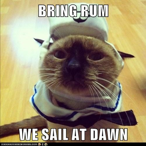 dawn,sail,Rum,sailor,Cats,captions