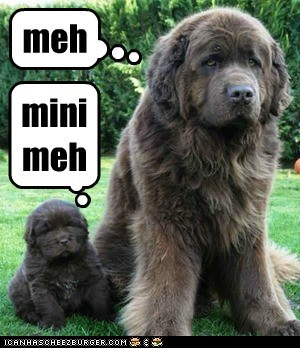dogs baby puppy mommy mini me newfoundland - 6664742912
