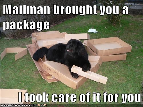 dogs cardboard boxes mailman package what breed mail