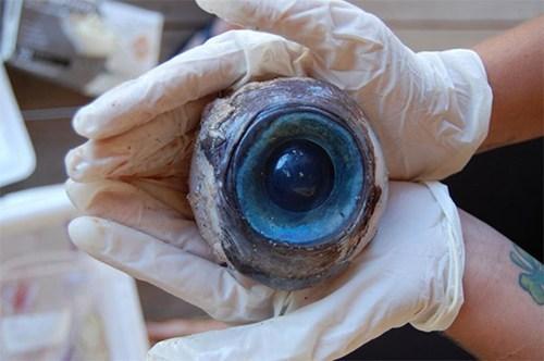 myseryious eyeball,ocean,science