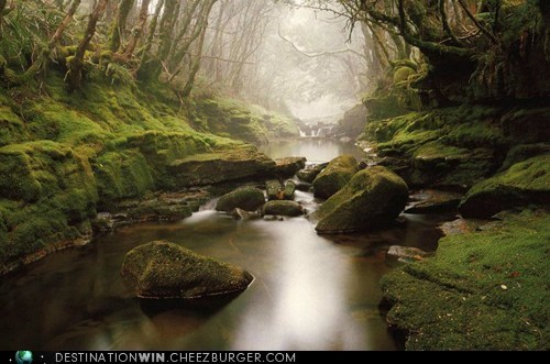 rain forest,tasmania,fog,river,creek