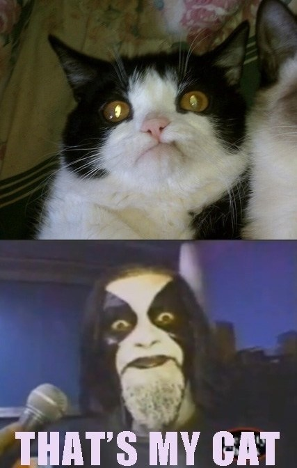black metal,cat