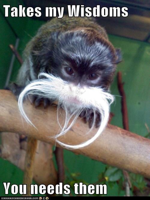 mustache old man wisdom monkey stupid need - 6665647360