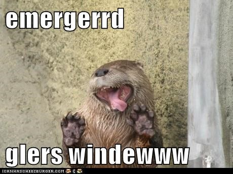 otter,Ermahgerd,window