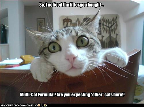 paranoid threatened captions multiple Cats litter - 6665658880