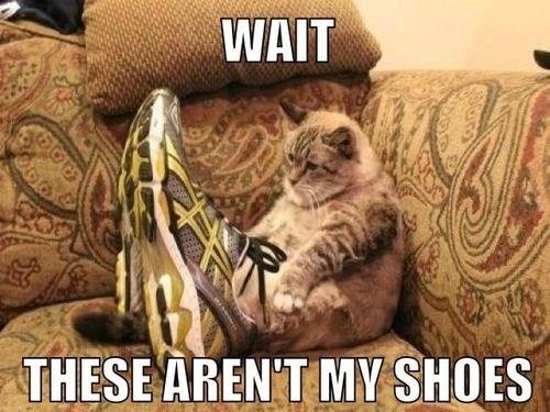 Cats shoes Memes sitting caption - 6665744384