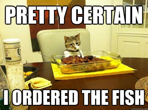 fish cat food lolcats - 6665837056