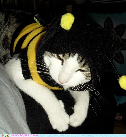 costume,cat,reader squee,halloween,pet,bumble bee,squee