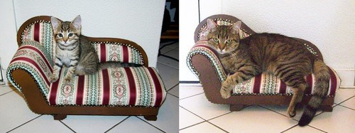 Cats,couches,Memes,Then And Now,time,growing up,grown up,draw me like one of your french girls