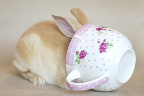happy bunday bunny rabbit tea cup tea party shy hiding