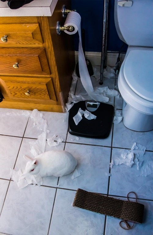happy bunday bunny rabbit squee TP toilet paper pranks mess - 6666208000