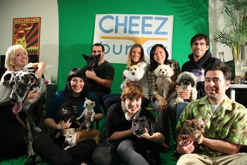 dogs cheezburger employees cute - 6666230272