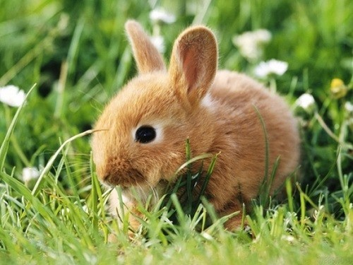 happy bunday bunny rabbit daisies squee grass - 6666231552