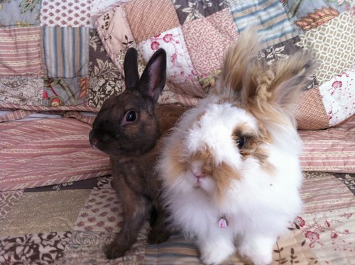 happy bunday,bunny,rabbit,bed head,Fluffy,squee