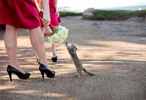 squirrel,Reach,bouquet,flowers,greedy