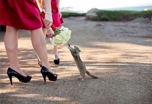 squirrel Reach bouquet flowers greedy