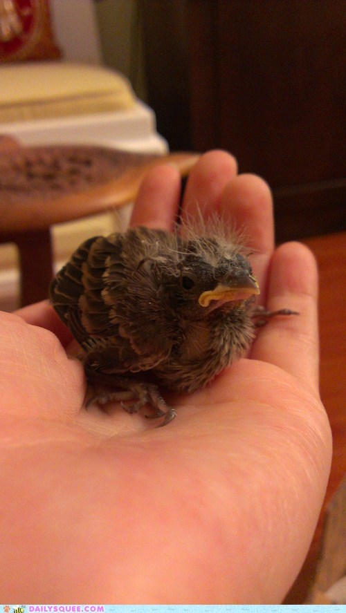 floof baby birds chick grumpy squee