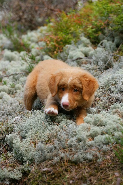 dogs,puppy,cyoot puppy ob teh day,moss,Fluffy