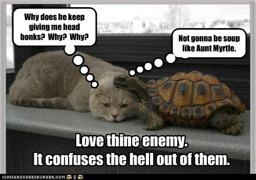 cat,confusing,love your enemy,soup,head bonk,turtle,why