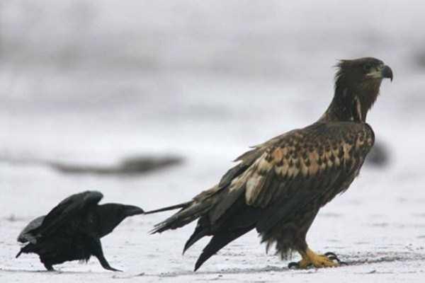Badass crows photos dont give a damn - 6668037