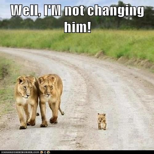 lions,arguing,poop,cub,parenting,smelly,changing
