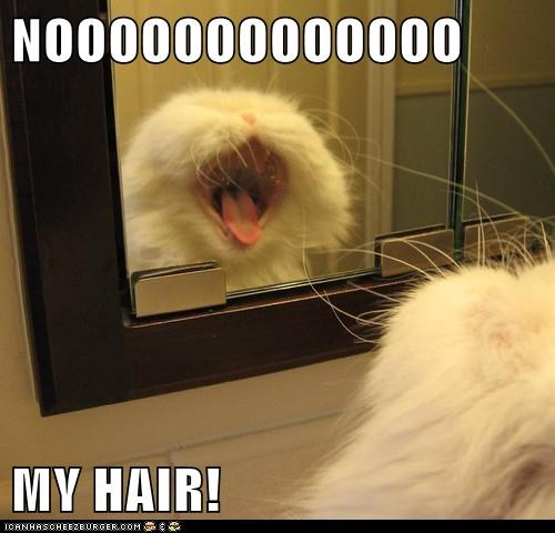 bad hair day ugly Cats captions mirror scream - 6668389376