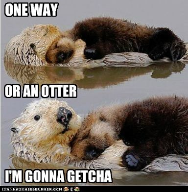ONE WAY OR AN OTTER I'M GONNA GETCHA