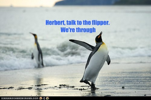 talk to the hand,penguins,flipper,through,breaking up,hmph