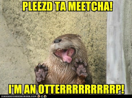 o hai otter please animal derp - 6668535040