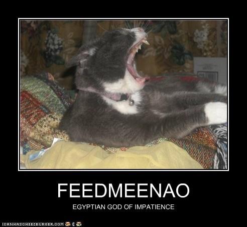 Cheezburger Image 6668593664