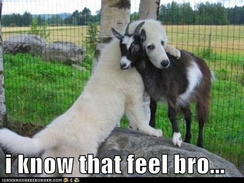 dogs,goats,i know that feel bro,hug