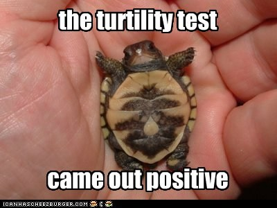 baby pun fertility positive test turtle squee