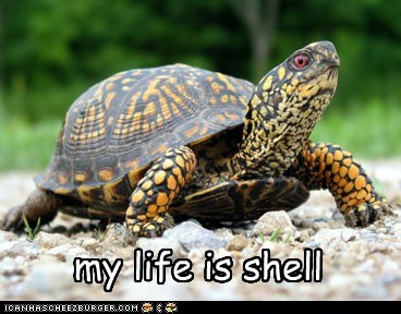 worst part,life is hard,butt,pun,hell,itch,shell,turtle