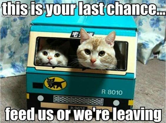 funny memes Memes Caturday Cats cat memes - 6668805