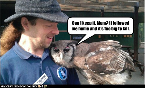 found too big human Owl pet eating kill can we keep him followed me home - 6669254144