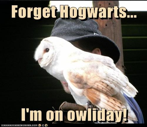 pun holiday Owl rest hedwig mail forget it Hogwarts - 6669482240
