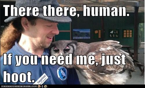 There there, human. If you need me, just hoot.