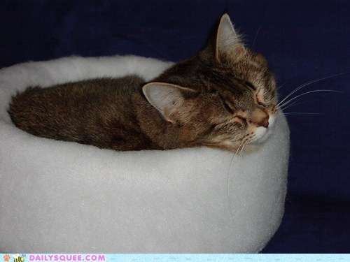 cat reader squee nap model cat bed pet squee - 6669963264